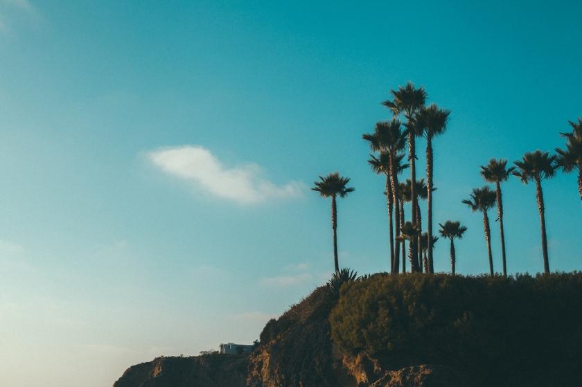 cool palm tree image